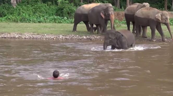 ゾウ 人助け1