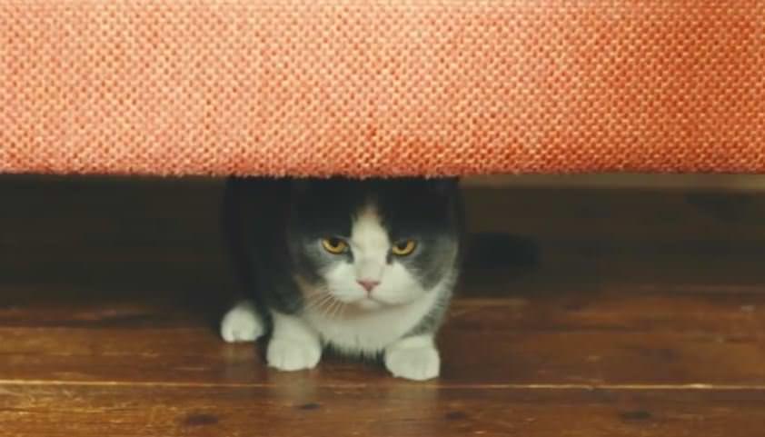 猫 シーバ1