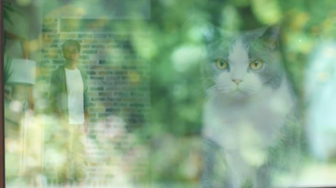 猫 シーバ3