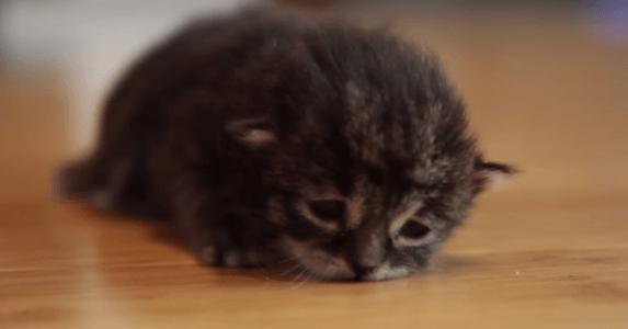 子猫 寝落ち2
