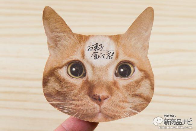 猫 メモ帳3