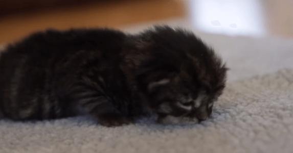 子猫 寝落ち1