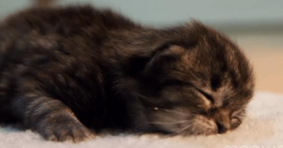 子猫 寝落ち4