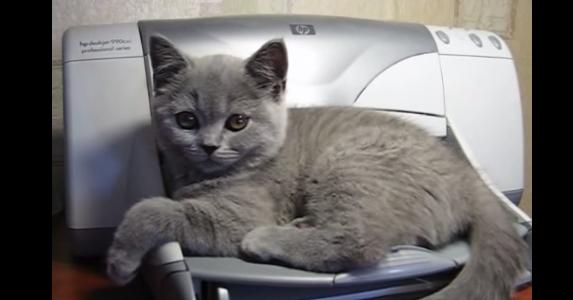 猫 プリンター1