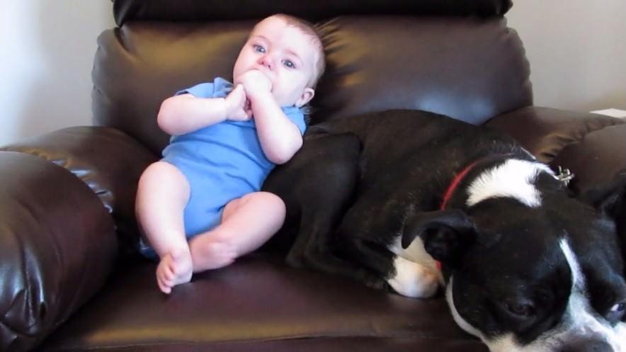 犬 赤ちゃん オナラ1