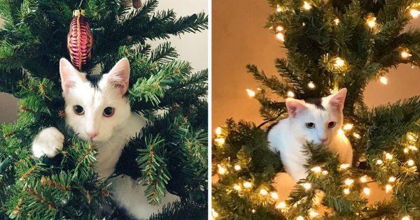 【12月の猫飼い恒例行事】大暴れしたあげく完成したニャンコツリー15選