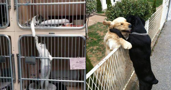その優しさにホッコリ!動物たちの「深い愛情」を証明する光景 10選