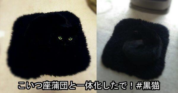 ご主人が黒猫を撮影したらまさかの同化!ステルス機能が高すぎるニャンコにたまげる