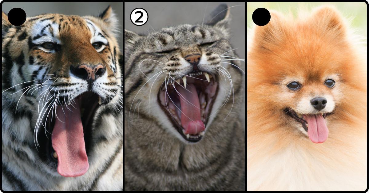 猫好きなら当然全問正解!「ネコ鑑定士認定試験」であなたの猫力が明らかに
