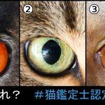 猫好きなら当然全問正解!「ネコ鑑定士認定試験」であなたの猫力を計測