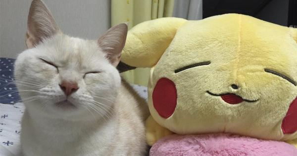【猫は笑いの神様】2016年に日本に爆笑をもたらした猫 24連発!
