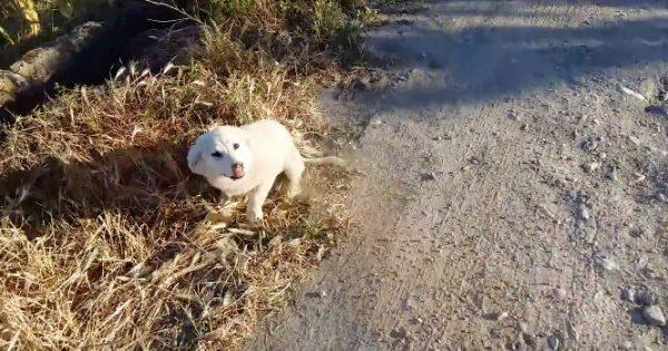 【運命の出会い!】ランニング中に遭遇した捨て犬。とても人懐っこい性格で・・・