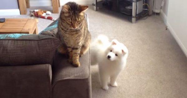 新しく家にきた子犬が先住猫とトモダチになりたくてがんばった11週間の記録♪