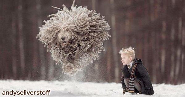 圧倒的な躍動感!モップ犬が大量の毛を振り乱す姿が迫力ありすぎて笑う