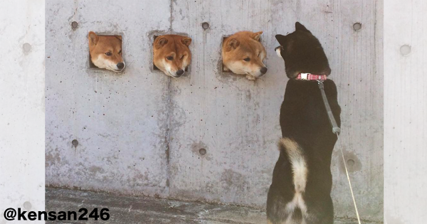 犬好きならこういうの見たことある!穴から顔を覗かせるワンコが犯罪的にカワイイ13選