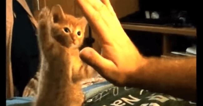 子猫 猫パンチ2