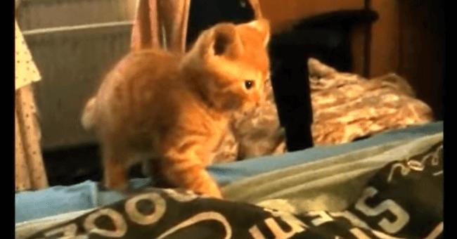 子猫 猫パンチ5