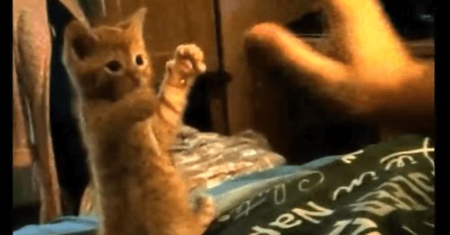 子猫 猫パンチ3