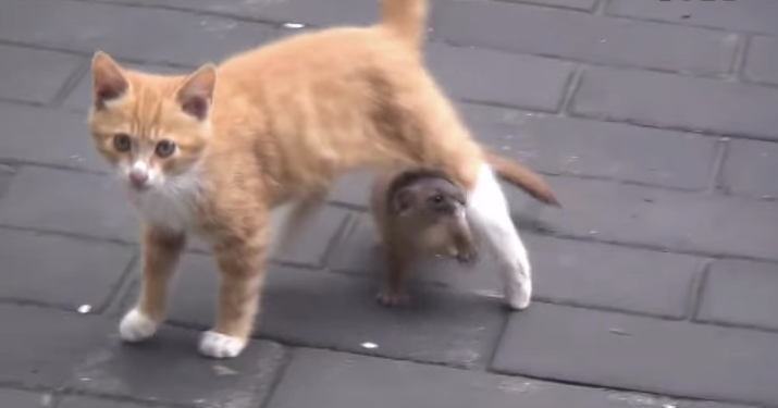 猫 イタチ2