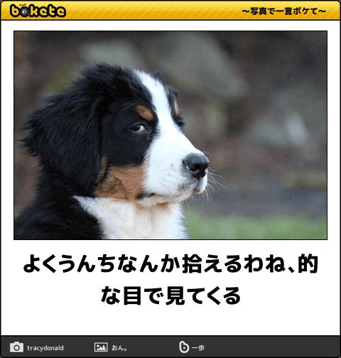 47801554