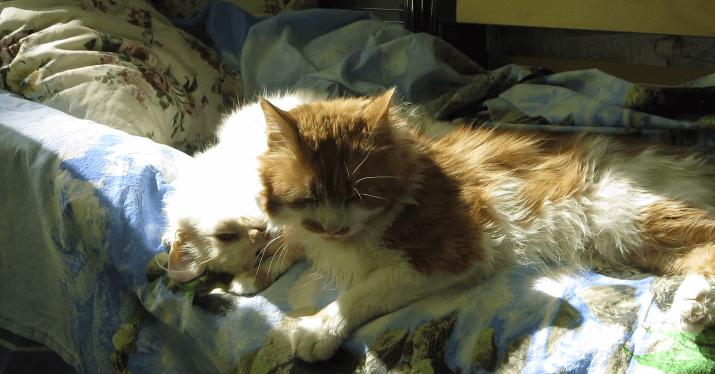 猫 ひなたぼっこ2