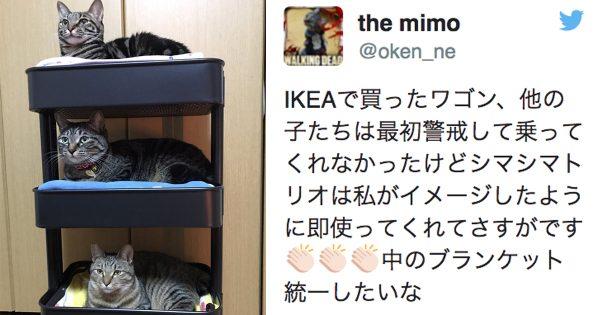 ちょっと買ってくるわ!IKEAのワゴンがめちゃカワ「猫ホテル」に大変身