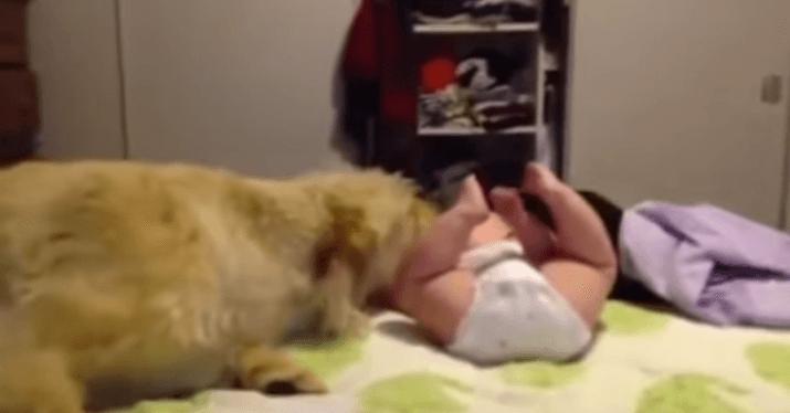 犬 赤ちゃん4