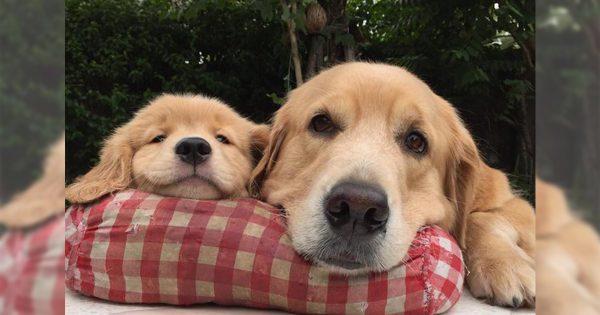 育児のできる男はかっこいい。犬界でも「イクメンわんこ」が流行ってるみたい11選