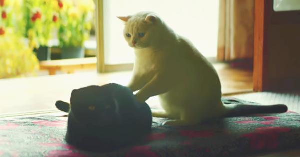 優しさでいっぱい。おばあちゃんと暮らす猫が「猛勉強する理由」に目頭が熱くなる