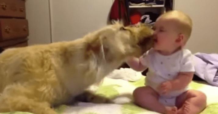 犬 赤ちゃん3
