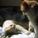 仲良くお昼寝してたのに…。右猫がおもむろに起きて猫パンチ!しかも4発!!