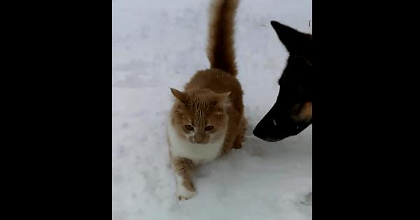 【8秒】雪の上を慎重に歩くネコさん。そこへやってきた犬が最悪のイタズラを…