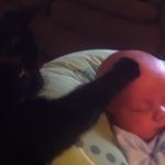 泣いている赤ちゃんを寝かせた黒ネコ。その方法が優しさに溢れていた(*´∀`*)