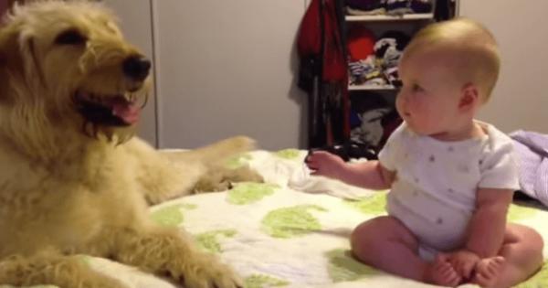 ワンコを触るか迷っていると犬から歩み寄りペロペロ♡最後の赤ちゃんも可愛い