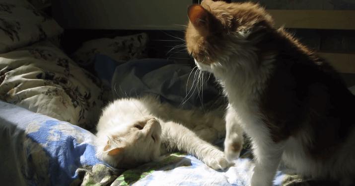 猫 ひなたぼっこ3