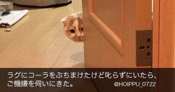 【天使の上目遣い】コーラをぶちまけた猫の謝罪方法が素直すぎて胸キュン