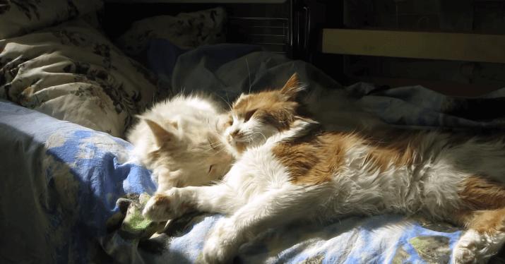 猫 ひなたぼっこ1