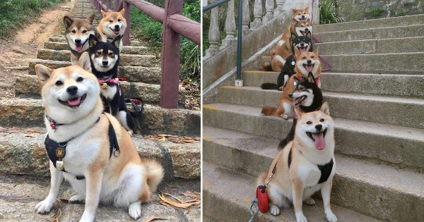 祝「エグザイヌ」結成!いつも仲良し柴犬ファミリーがEXILEと完全に一致(写真12枚)