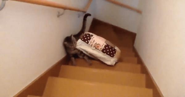 悲しすぎる結末。ベッドを2階に運んでいたネコさん、途中で落としてしまい・・・