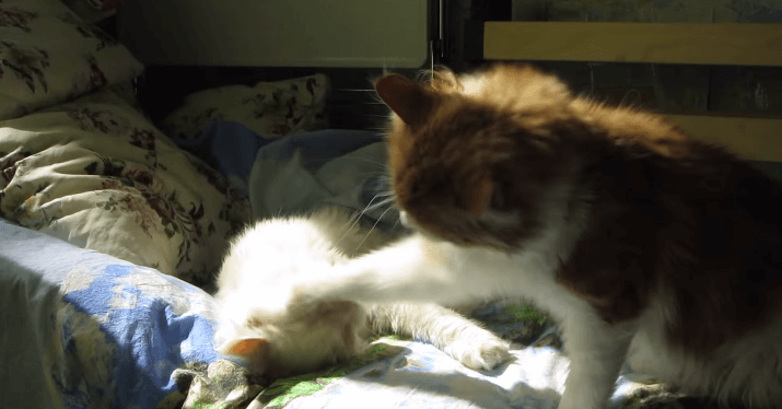 猫 ひなたぼっこ4