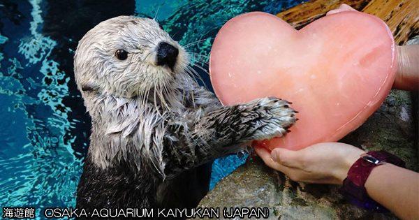 胸キュンをありがとう!バレンタインプレゼントをもらった水族館の仲間たちが嬉しそう