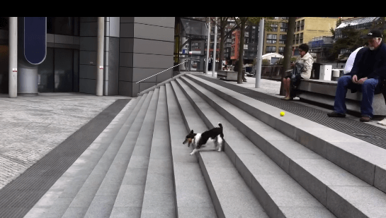犬 ボール1