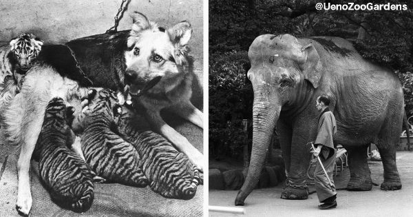 「子トラと母犬」「暴走したゾウと闘病中の飼育員」上野動物園の2つの絆のお話
