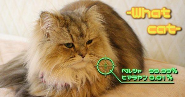 この猫なにか教えて!画像を送るだけで種類を特定してくれる「What Cat」にびっくり!!