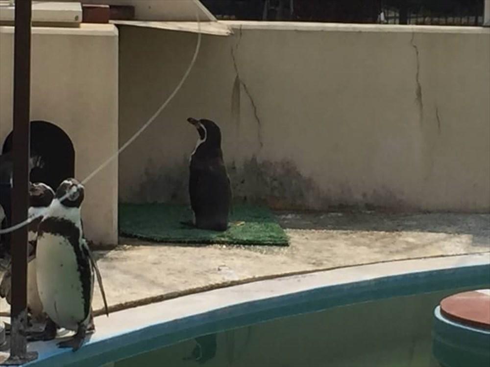 人間とおんなじだ… 人見知りすぎるペンギンの背中に哀愁を感じる