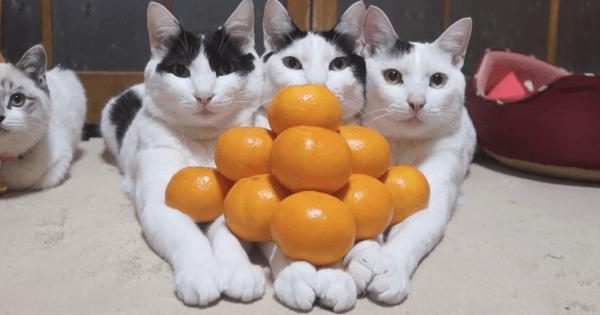 手の上で『みかんピラミッド』作っても全く動じない仲良し3人組が可愛すぎる!