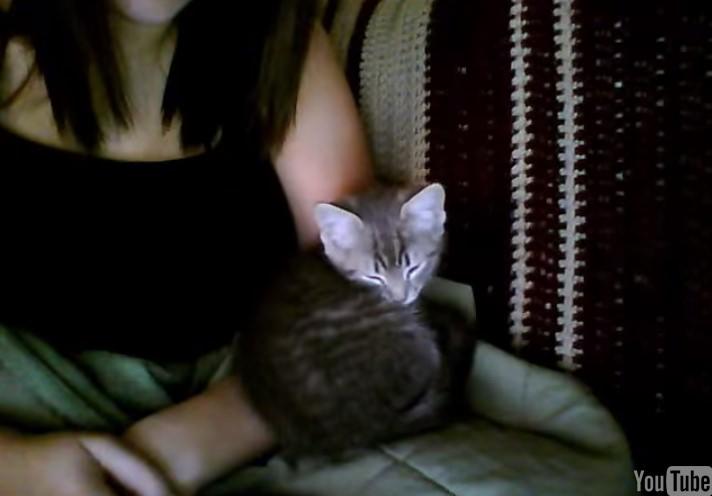 子猫 キス3