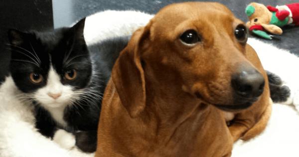 「僕は見捨てないから!」歩けない猫を守っていた犬。友情で結ばれた2匹を保護