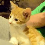 【萌え♡】カッコ可愛いハンサム子猫が寝そうで寝ない動画に萌えが止まらない