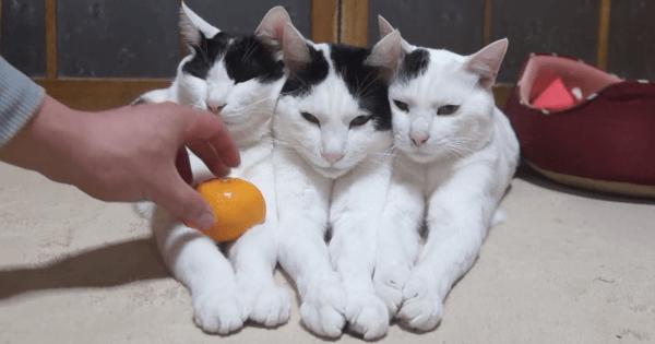 猫 みかん1